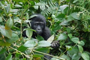 Mountain bike | Mountain gorillas